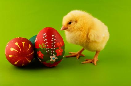 Dekoracje Wielkanocne - Wielkanocny kurczaczek i kolorowe pisanki